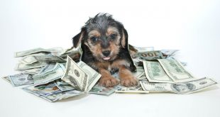 Puppy With Money