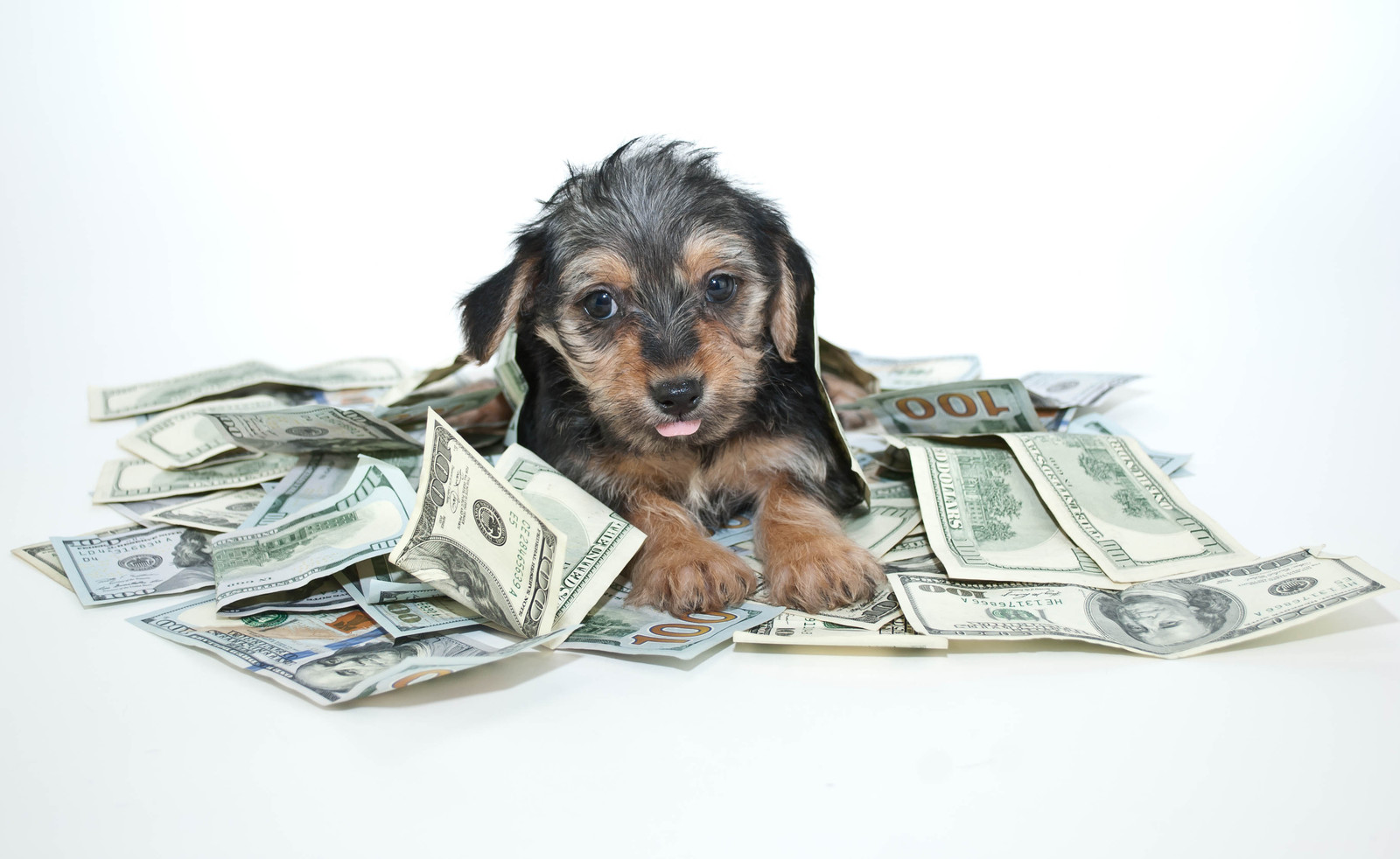 The Real Cost of Pet Ownership