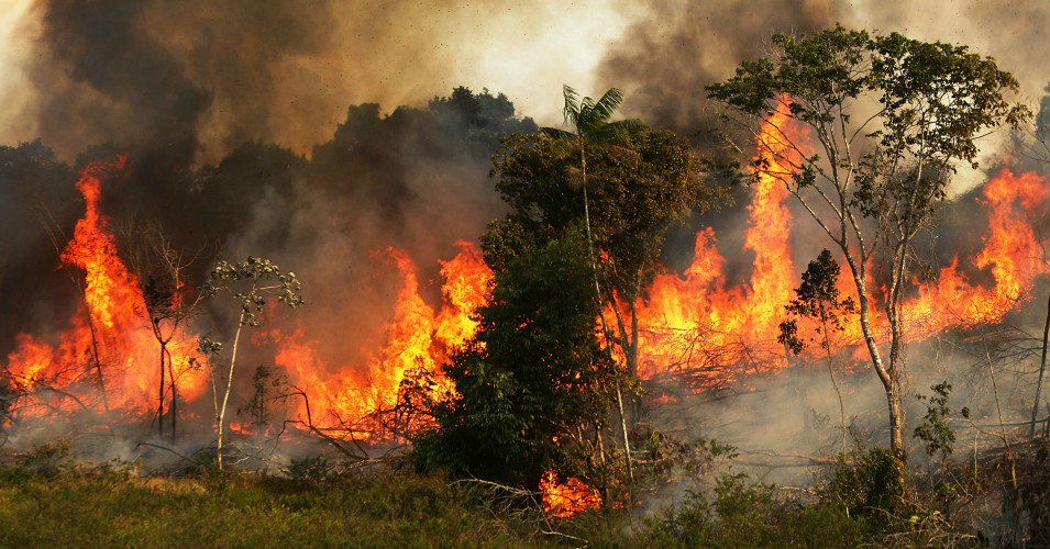 The Cost of the Amazon Wildfires